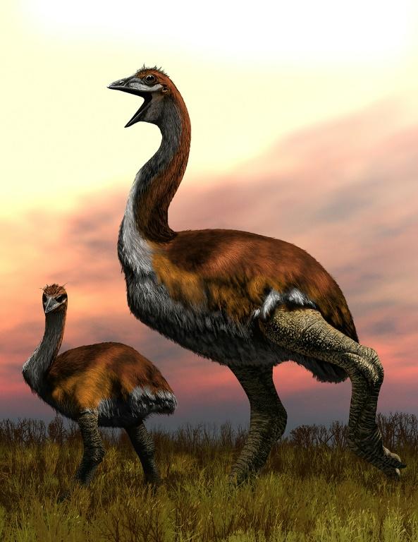 Ending decades of doubt, 'biggest bird' dispute put to nest
