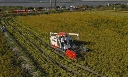 China's food security ensured, new import sources set to offset trade concerns