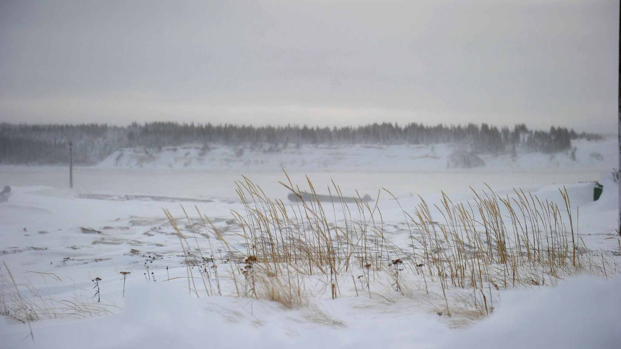 Rising temperatures change plant species in Arctic tundra: study