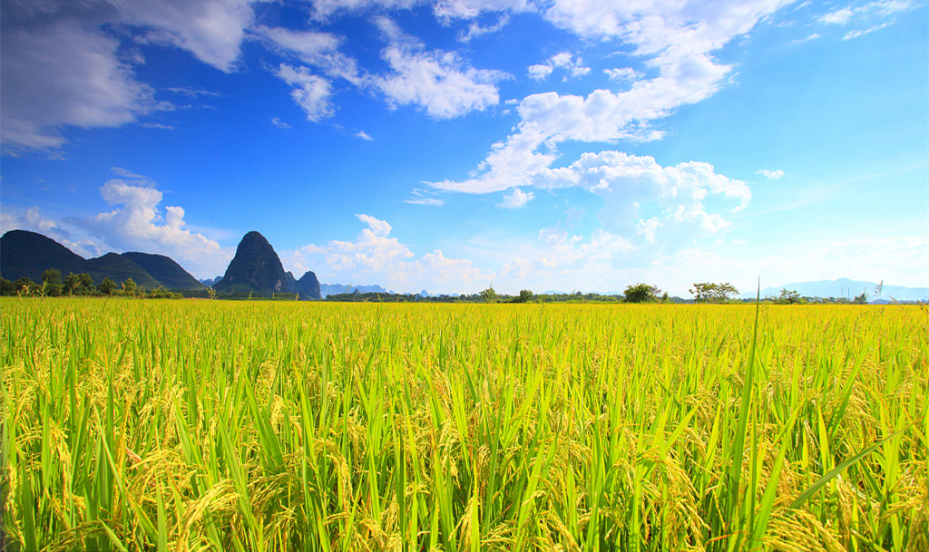 The Green Super Rice Project leads countries to food security