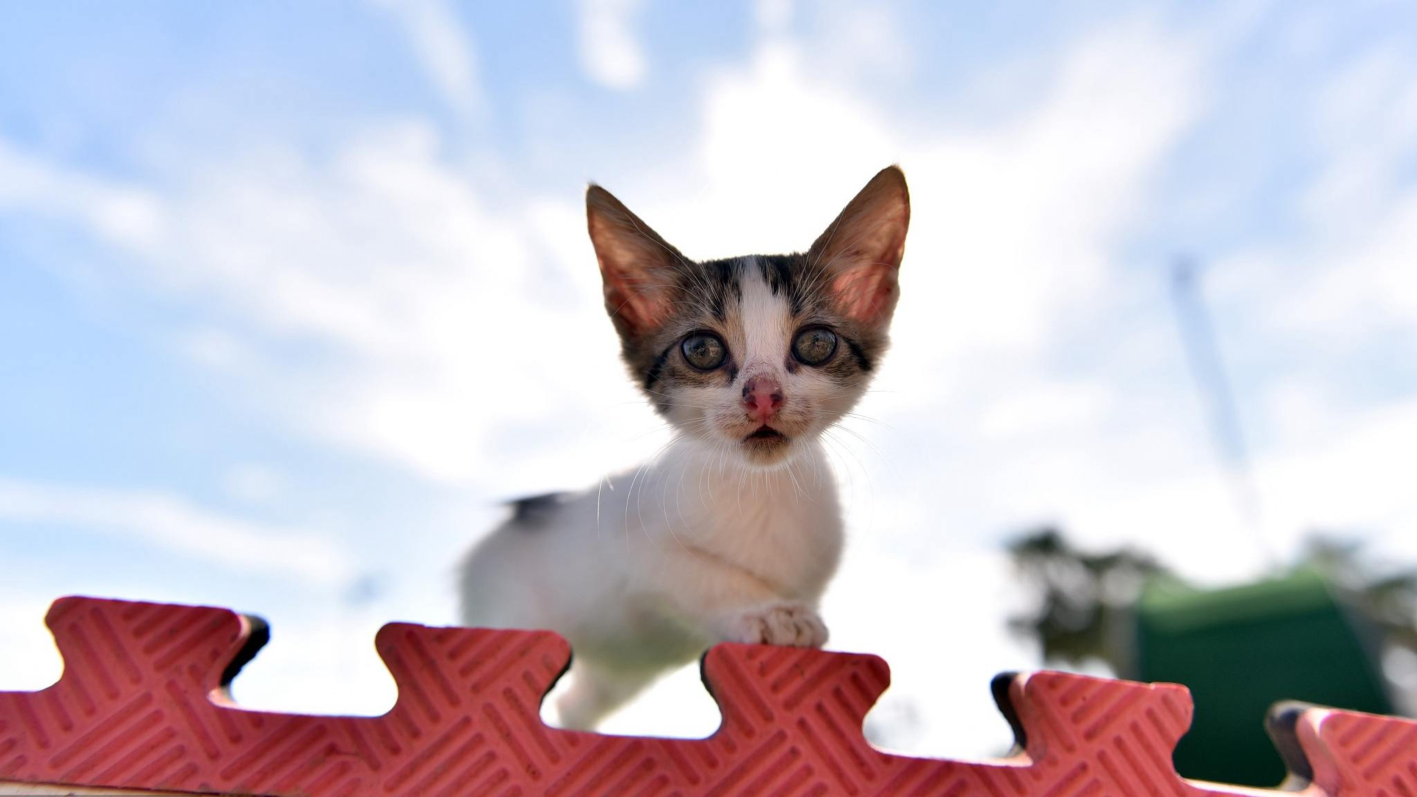 Super lovely! Meow Park shelters stray cats in Turkey