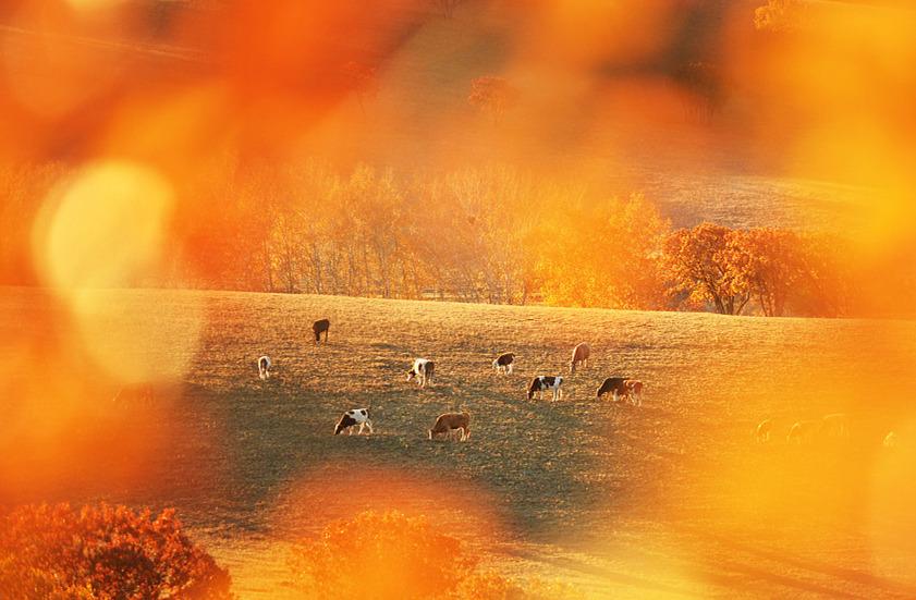 Fairytale autumn scenery in Inner Mongolia Autonomous Region