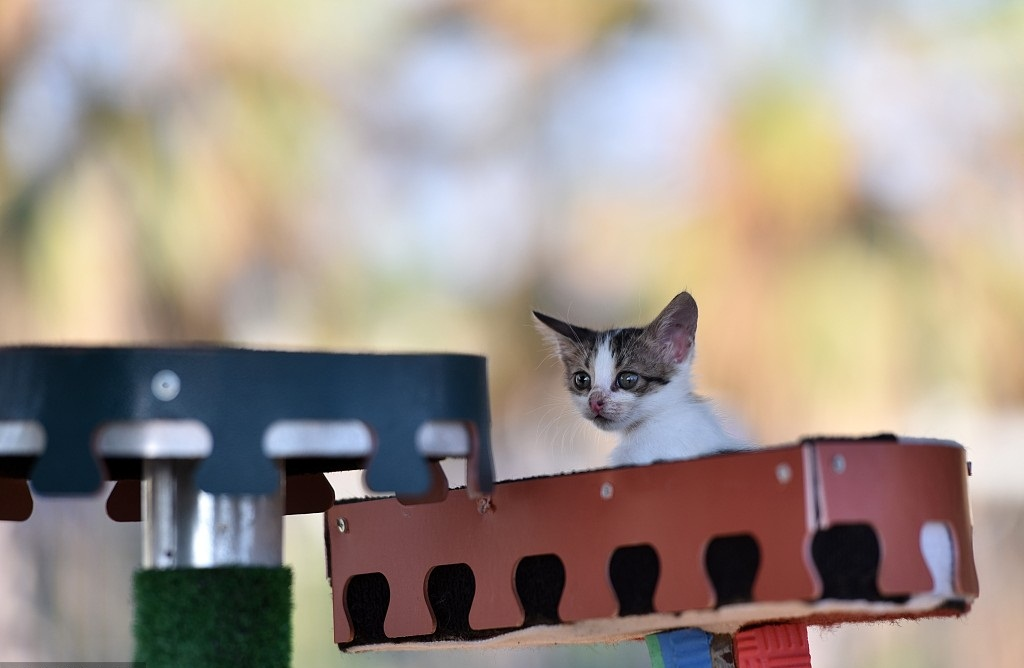 Meow Park offers shelter for stray cats