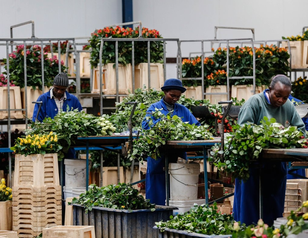 Kenya's horticultural sector eyes China expo to boost revenues