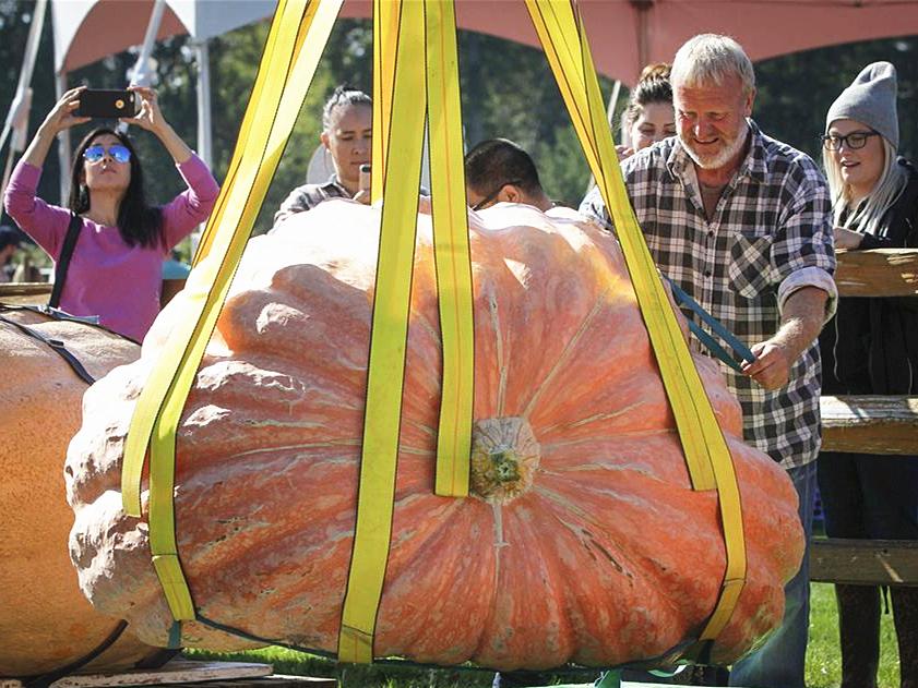 Giant Pumpkin Weigh-Off Event held in Langley, Canada