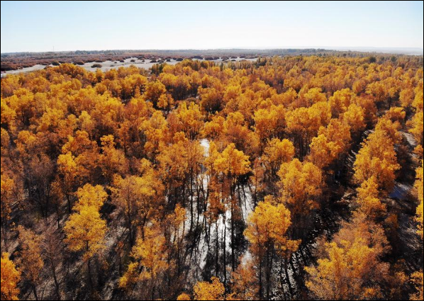 Scenery of Jinta desert forest park in NW China's Gansu