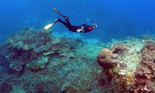 Science, tourism clash on Great Barrier Reef