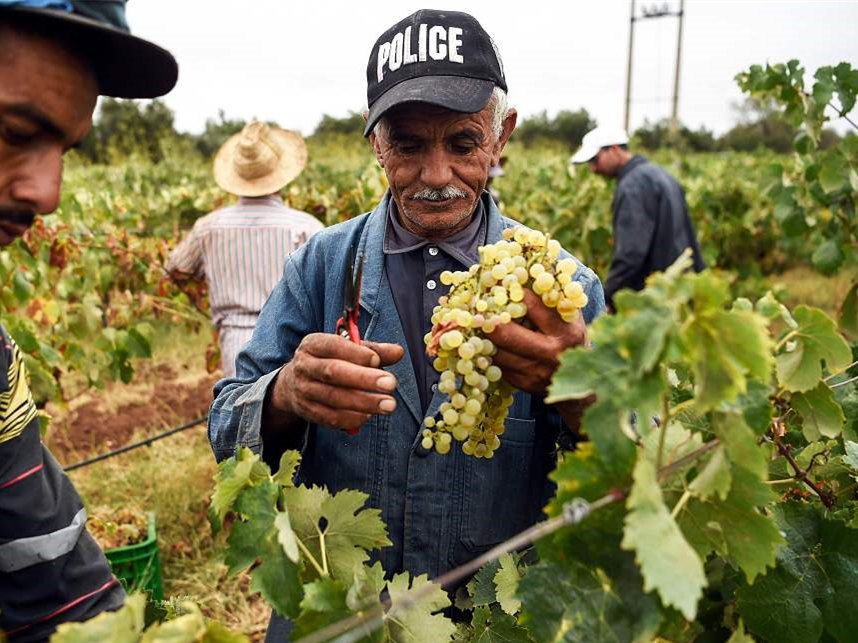 Moroccan winery aims to enter Chinese market via China's first import expo