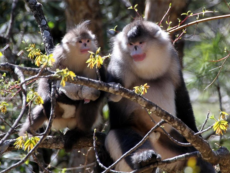 Yunnan regulation protects biodiversity