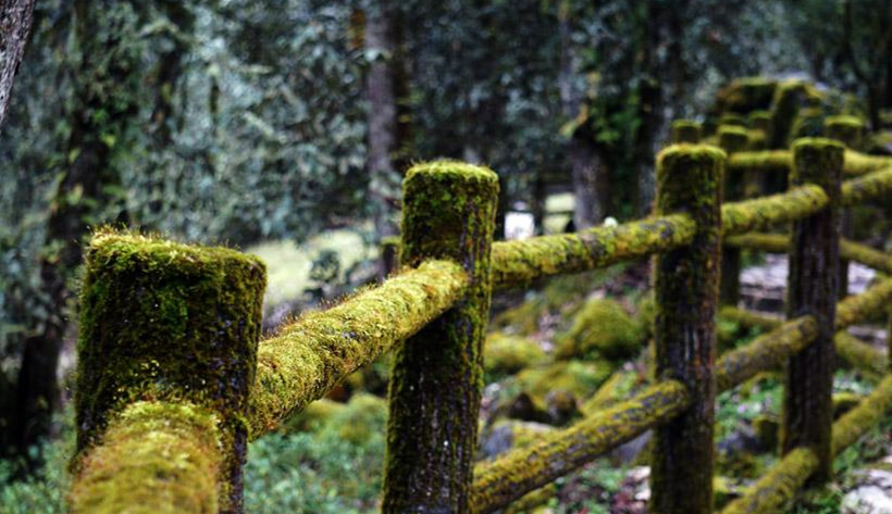 Green 'gem' forest in SW China's Sichuan
