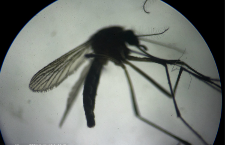 China confirms first case of imported Zika virus this year