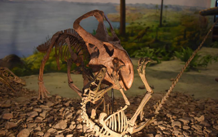 Hebei fossil biggest in its biological group so far