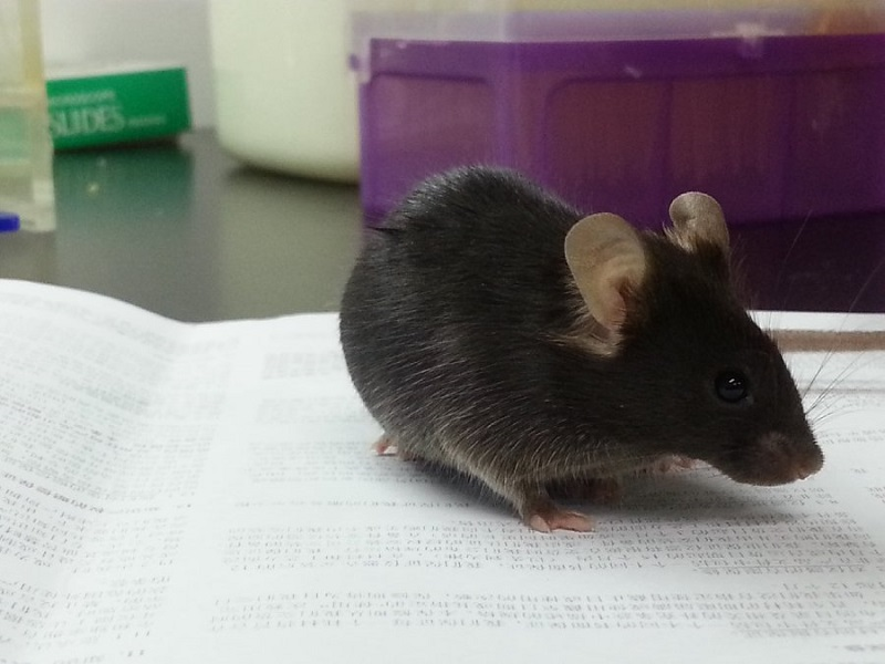 Scientists find neurons that help rats 'make wise decisions'