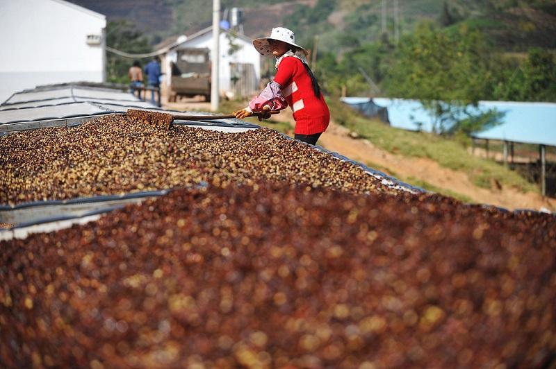 Starbucks' move in Yunnan