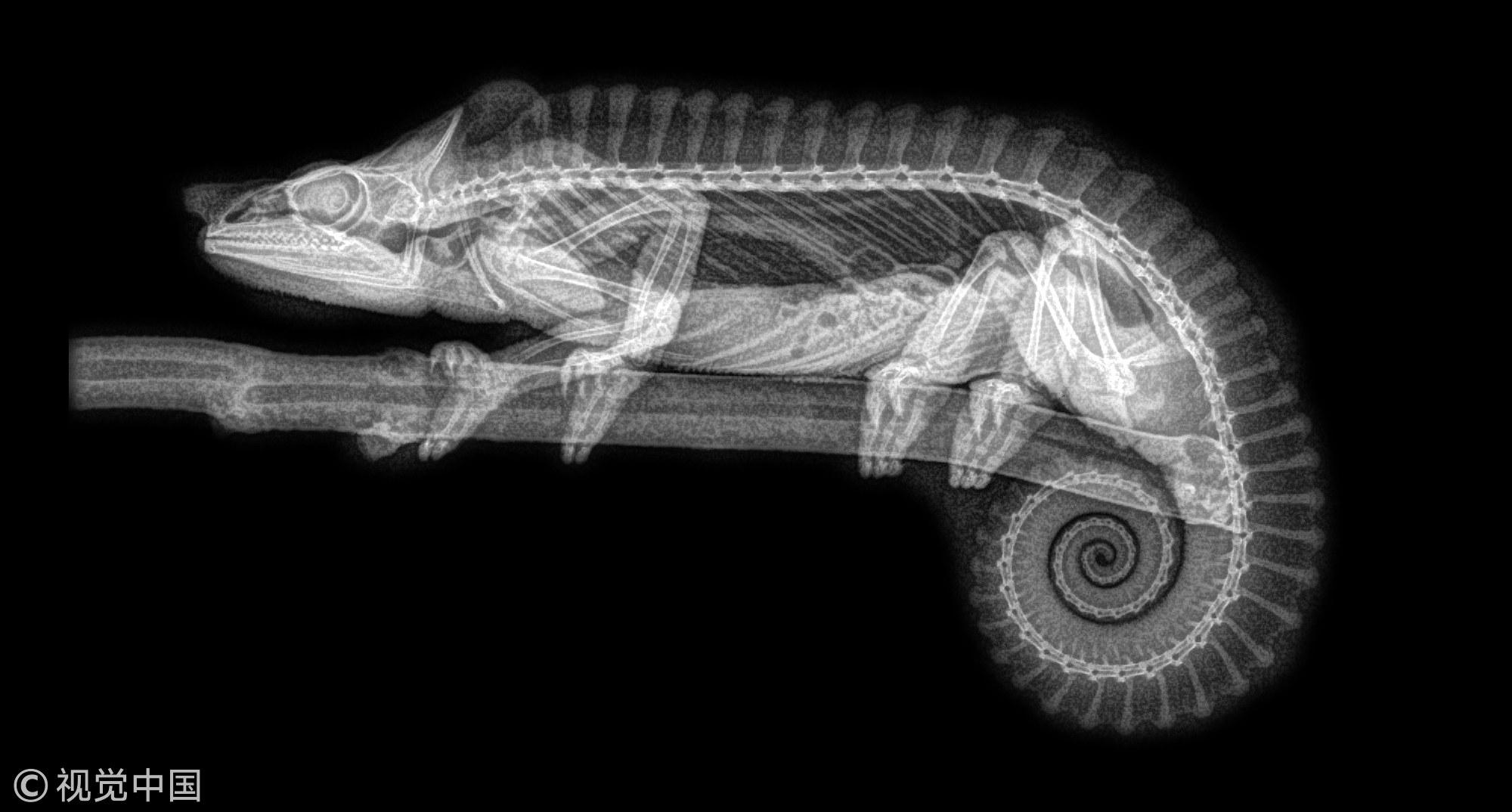 X-rays of Oregon Zoo animals yield spooky Halloween vibes