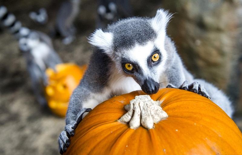Halloween Pumpkin party for animals