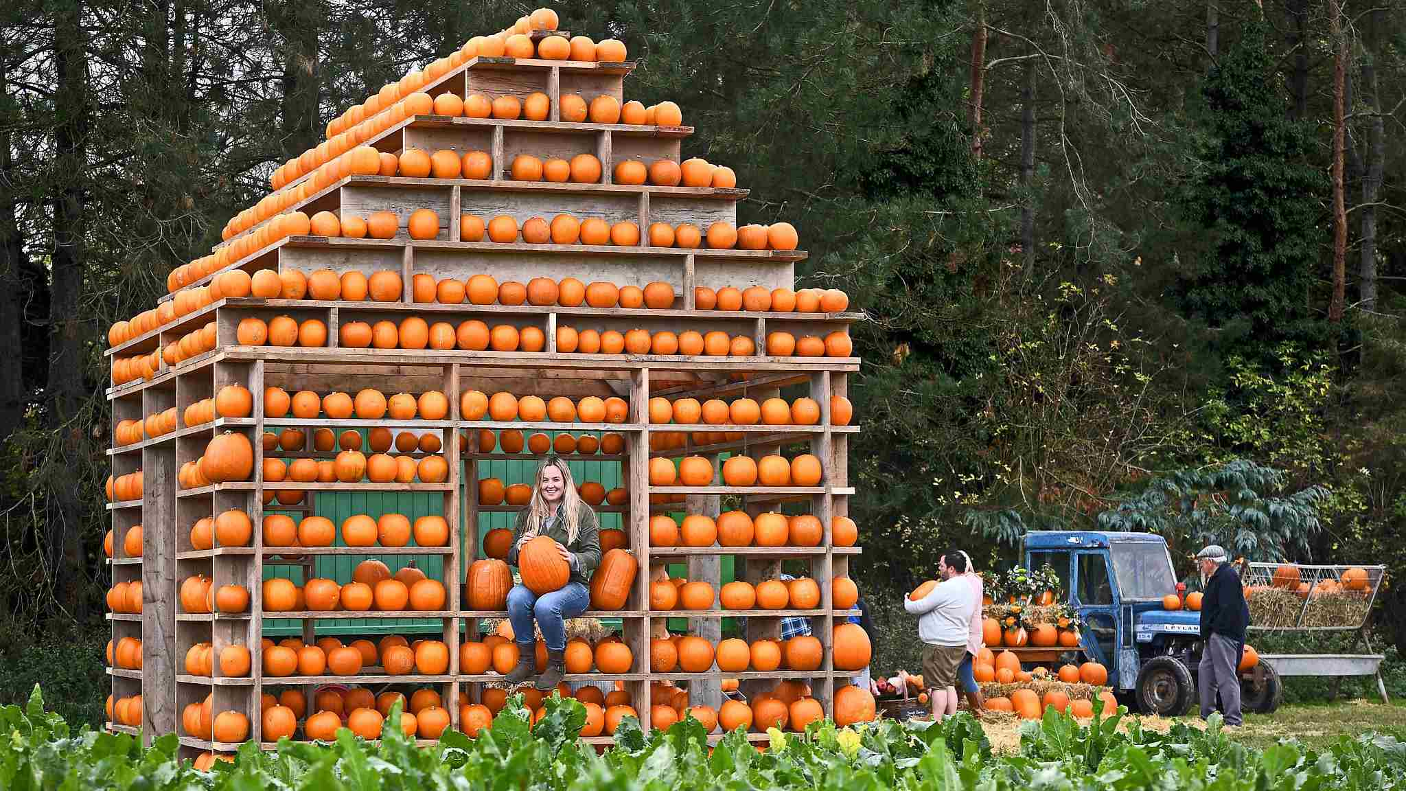 Choose your pumpkin at this pumpkin house