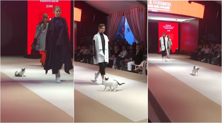 Cool cat on catwalk steals the show in Istanbul