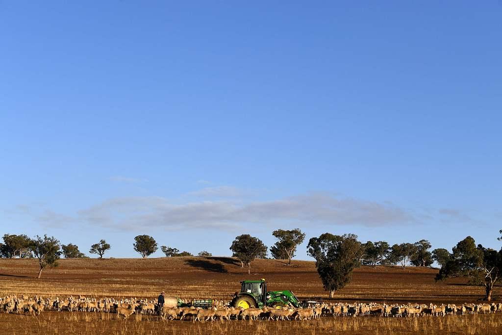 Australia prepares to import grain in wake of devastating drought