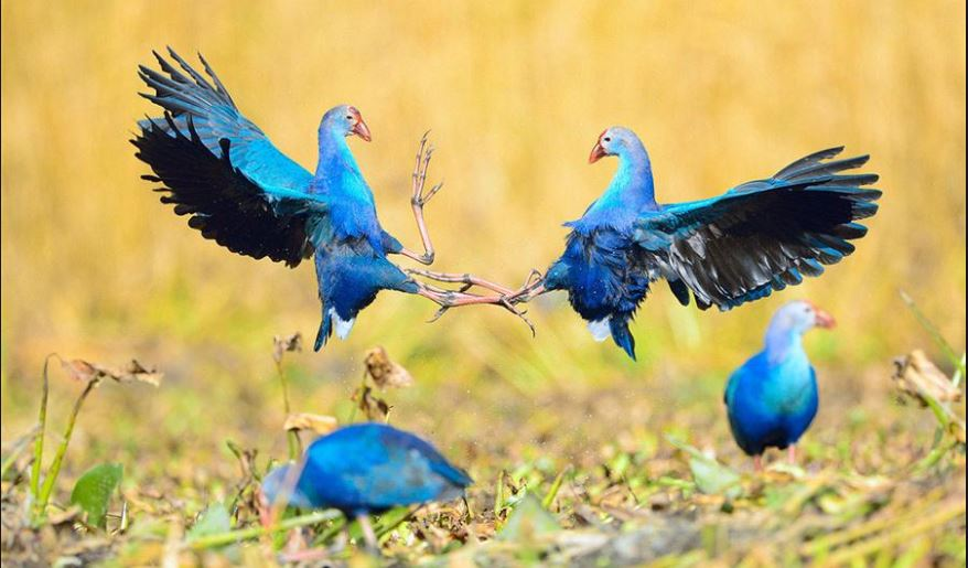 Five arrested for illegally hunting wild birds in east China
