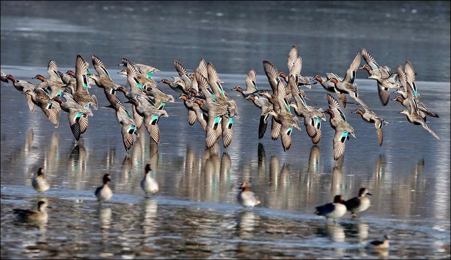 Birds flock in droves to China for winter migration