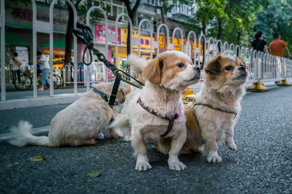 Chinese spending more on pets
