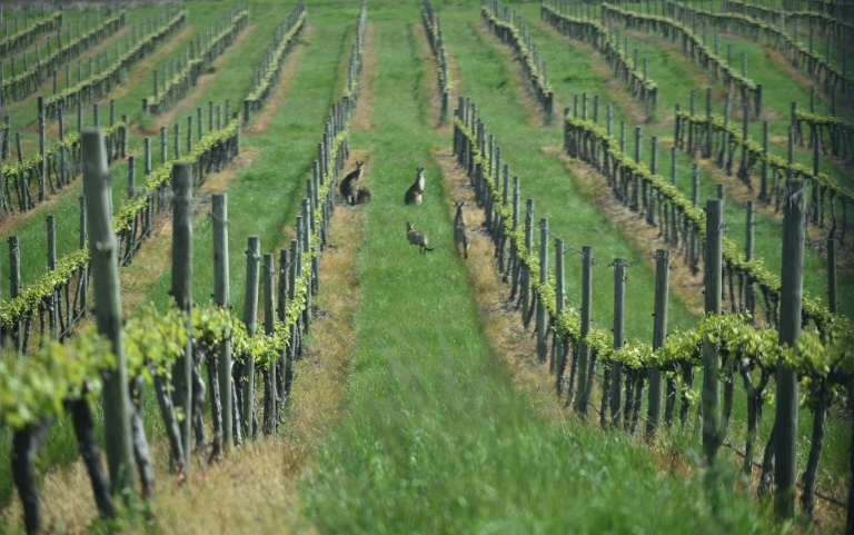 Australia extends 'backpacker visas' to ease farm worker shortage