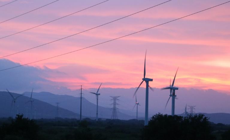 Wind farm 'predator' effect hits ecosystems: study