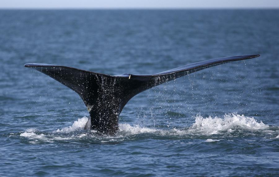 whale_副本.jpg