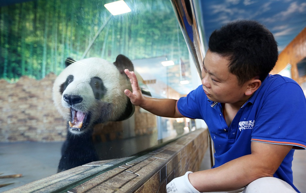 What's it really like to raise a panda?