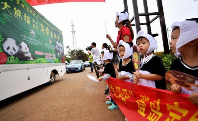 Tropical island Hainan welcomes first panda settlers