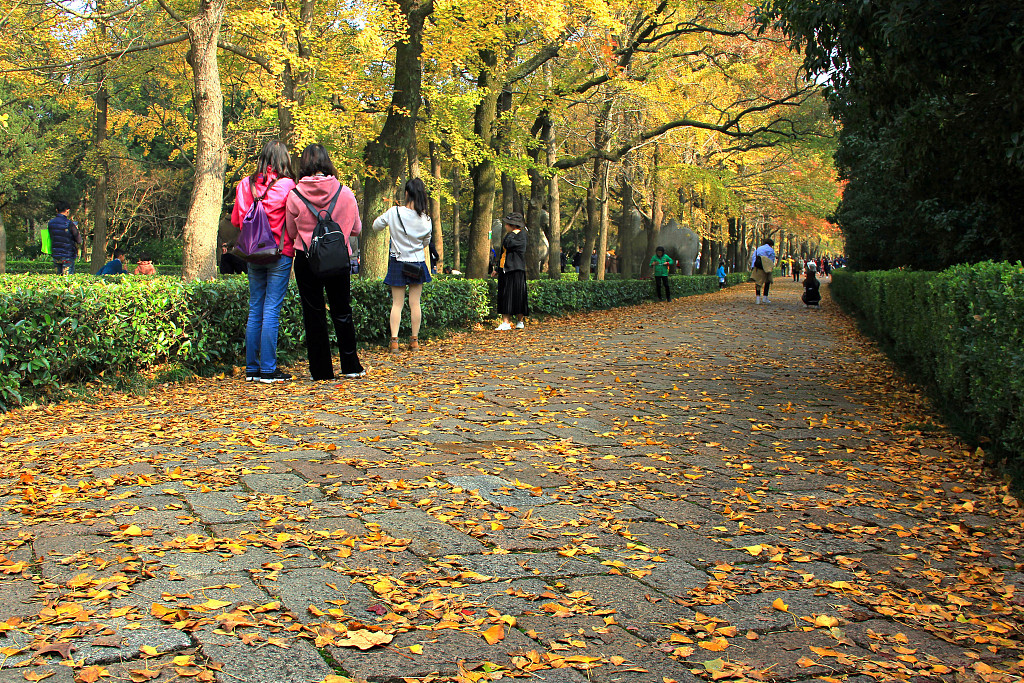 Nanjing orders that autumn leaves remain on the ground