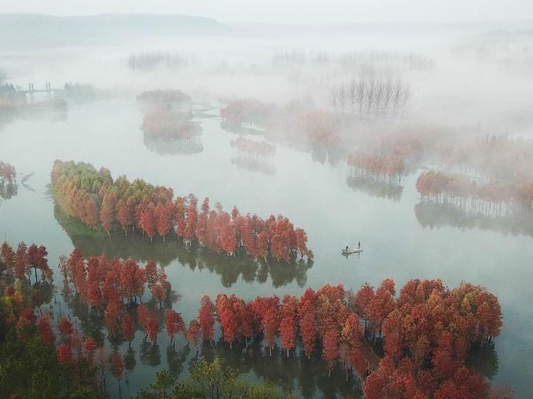 Scenery of redwood forest in E China's Jiangsu