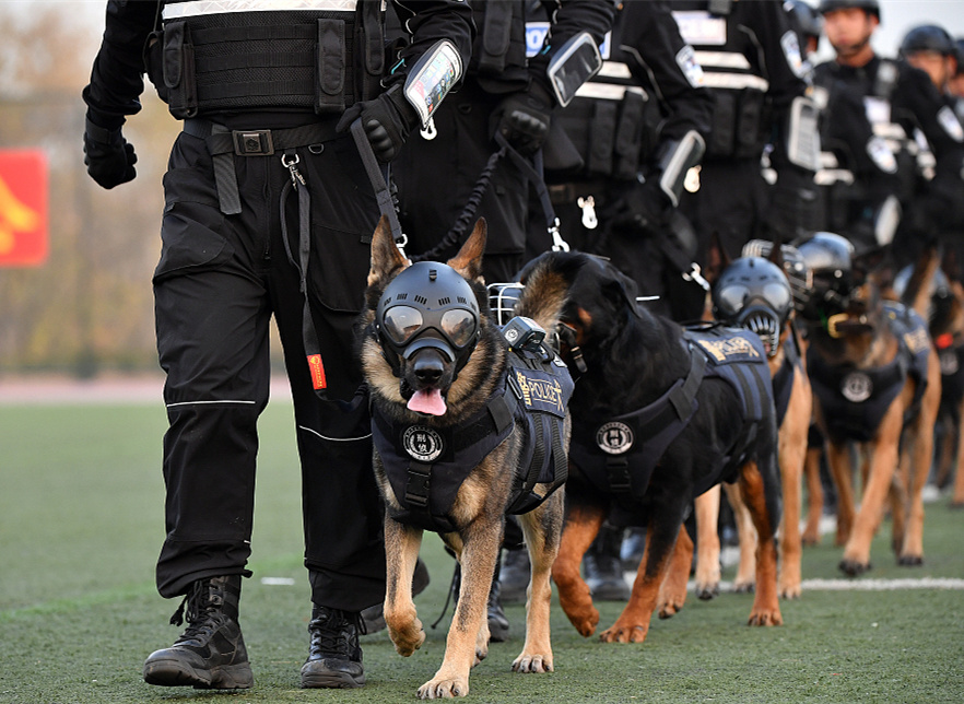 China's police dog competition wraps up in Beijing