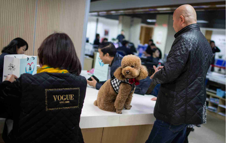New dog restrictions in Chinese city get mixed responses