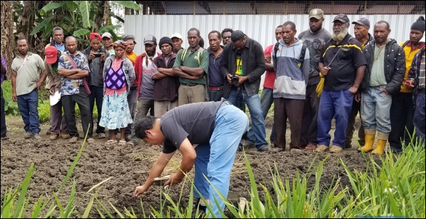 'China Grass' prospers in PNG's promising land, helps alleviating poverty
