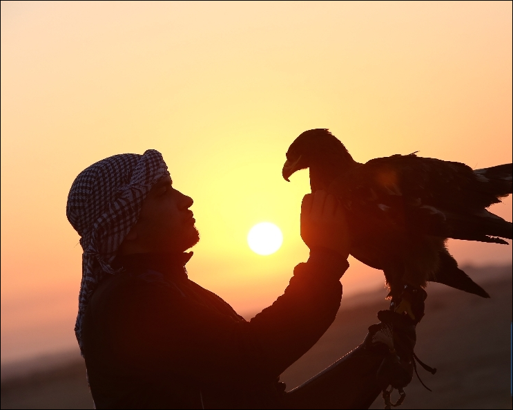 Falconers in Egypt gather to show skills, raise awareness
