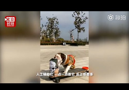 The real Dogtown? Skateboarding bulldogs shred up East China city