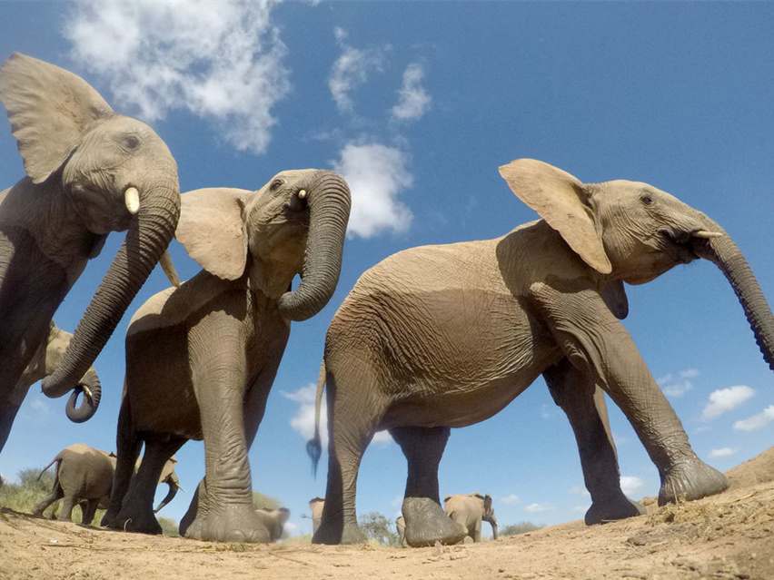 China strengthens cooperation with East Africa to curb wildlife trade
