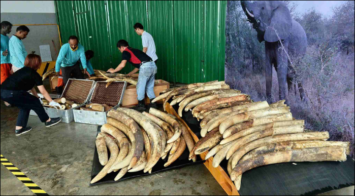 Singapore to end ivory trade soon