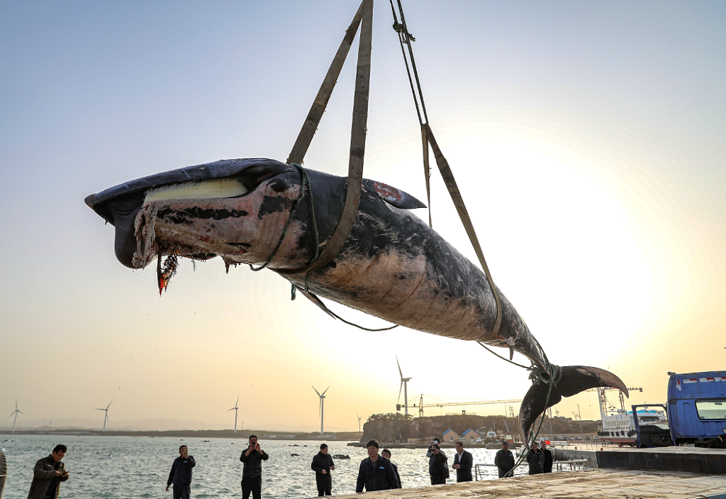 Whale found dead in Shandong