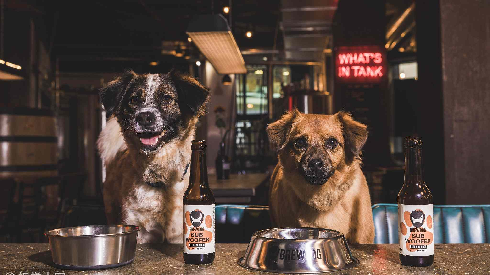 UK's BrewDog launches its first dog-friendly craft beer