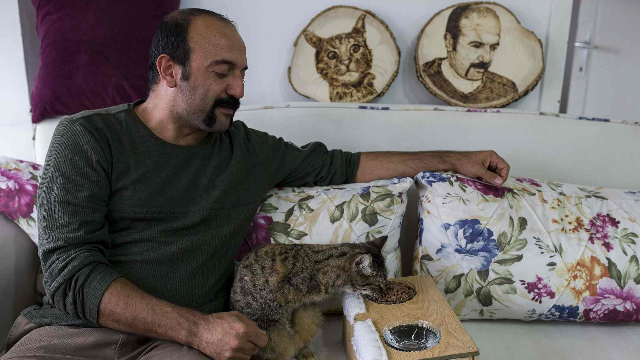 Disabled cat rescued by Turkish carpenter finds love at new home