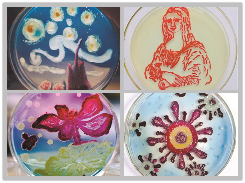 Medical students paint 'Mona Lisa' with bacteria