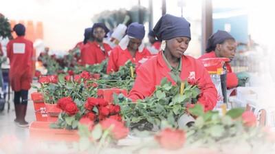 Kenyan flowers bloom in Chinese market