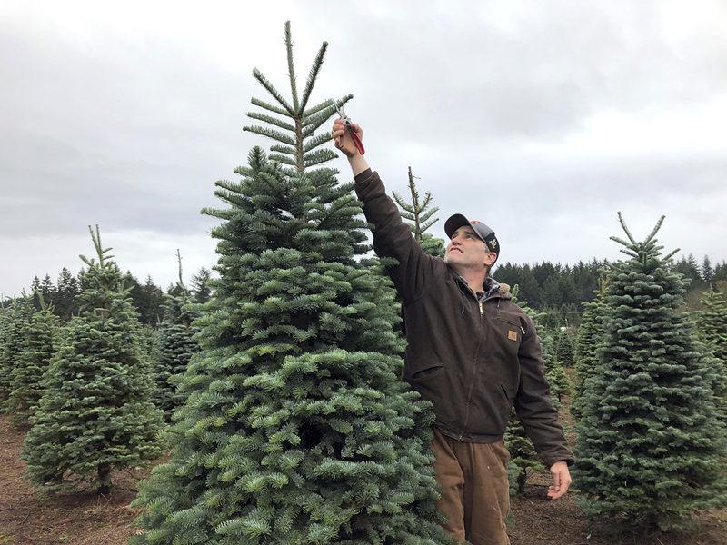 christmas tree_副本.jpg