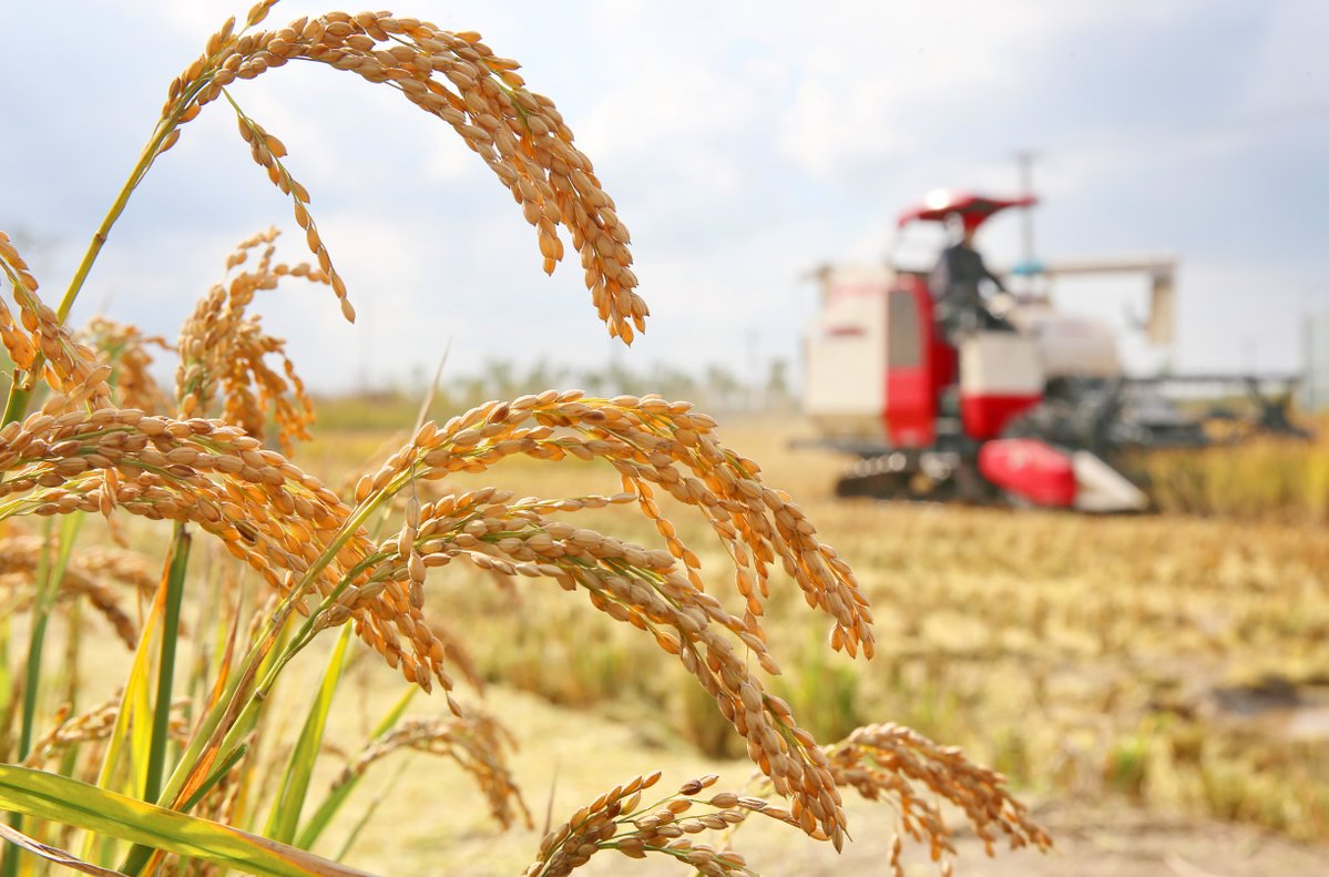China secures another year of bumper harvest