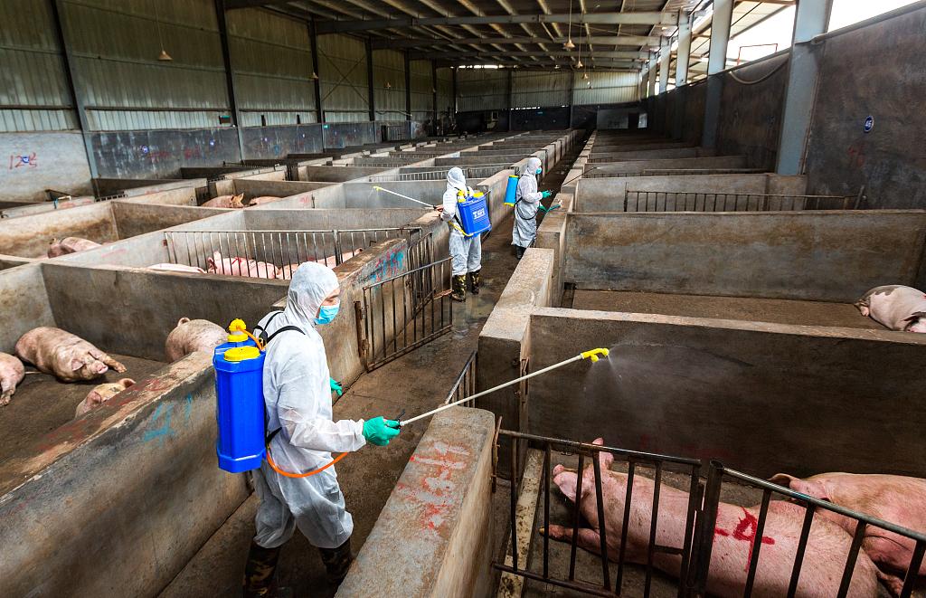 China continues lifting swine fever quarantine