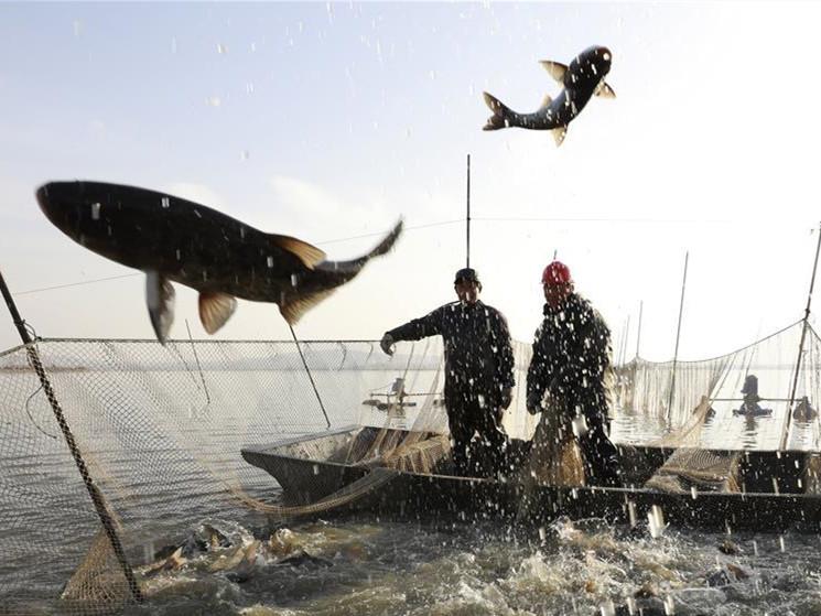 Xuyi County in E China's Jiangsu enters winter fishing season