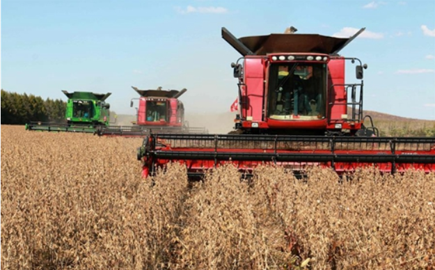 During trade truce, Chinese firms purchase US soybeans
